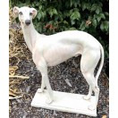 65cm Greyhound Dog Statue