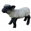 50cm Black Head Lamb