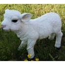 50cm Lamb Walking
